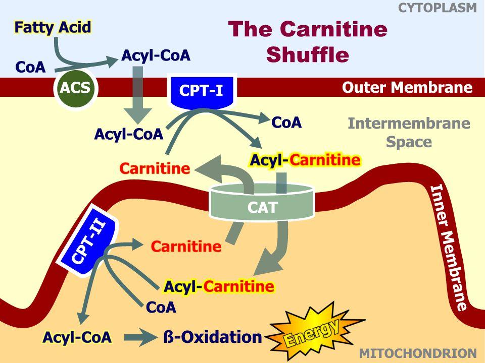 The Carnitine Shuffle