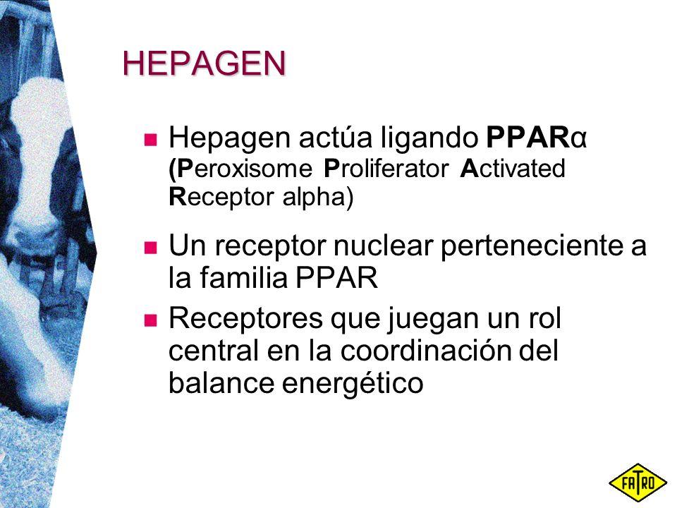 HEPAGEN Hepagen actúa ligando PPARα (Peroxisome Proliferator Activated Receptor alpha) Un receptor nuclear perteneciente a la familia PPAR Receptores