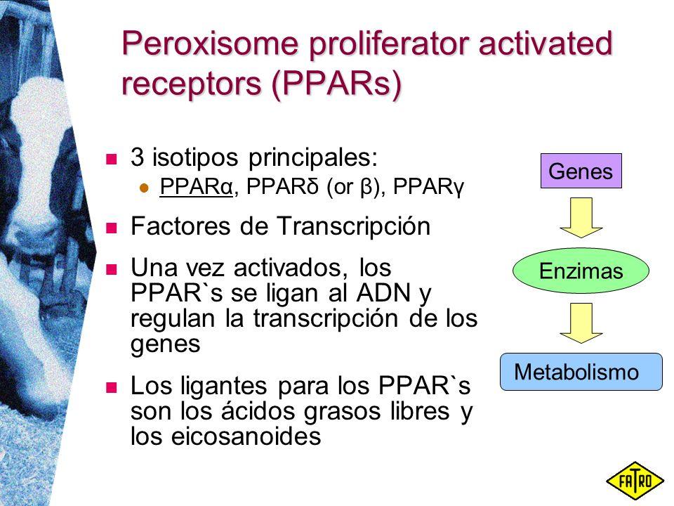 Peroxisome proliferator activated receptors (PPARs) 3 isotipos principales: PPARα, PPARδ (or β), PPARγ Factores de Transcripción Una vez activados, lo