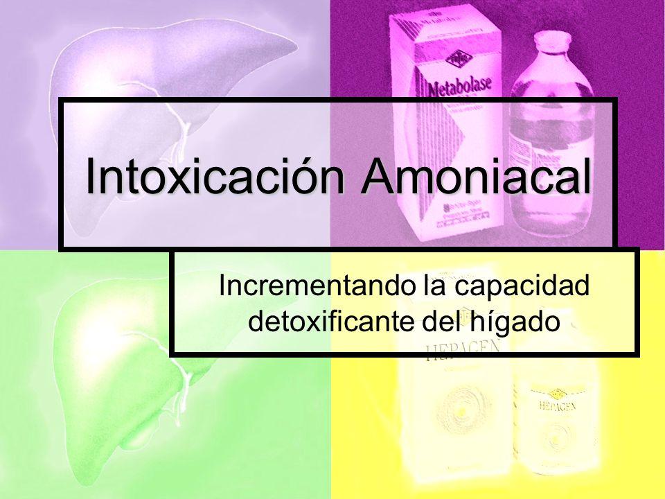 Intoxicación Amoniacal Incrementando la capacidad detoxificante del hígado