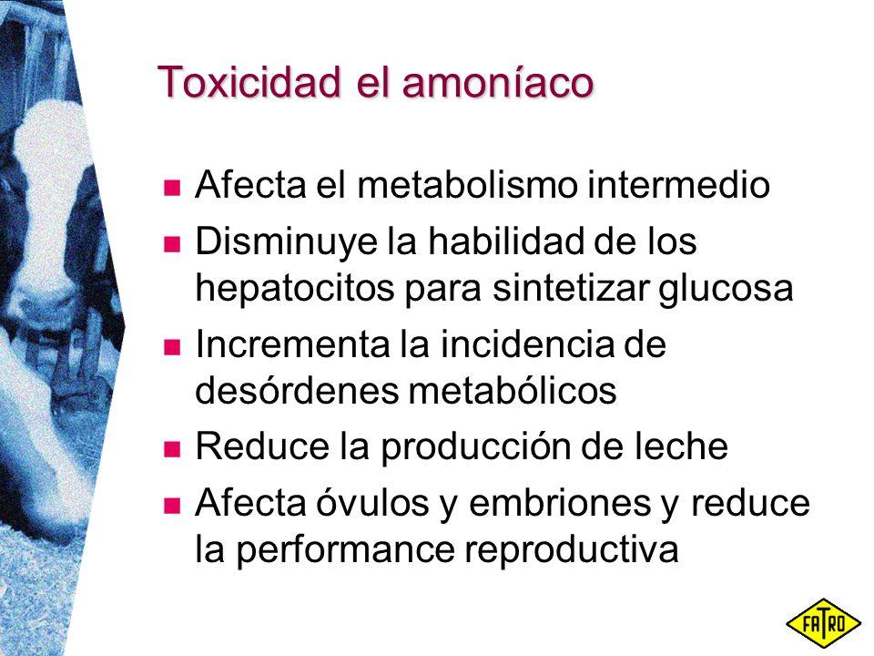 Toxicidad el amoníaco Afecta el metabolismo intermedio Disminuye la habilidad de los hepatocitos para sintetizar glucosa Incrementa la incidencia de d