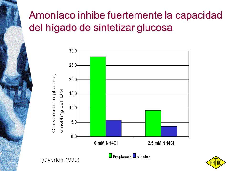 Amoníaco inhibe fuertemente la capacidad del hígado de sintetizar glucosa (Overton 1999)