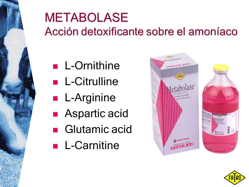 METABOLASE Acción detoxificante sobre el amoníaco L-Ornithine L-Citrulline L-Arginine Aspartic acid Glutamic acid L-Carnitine