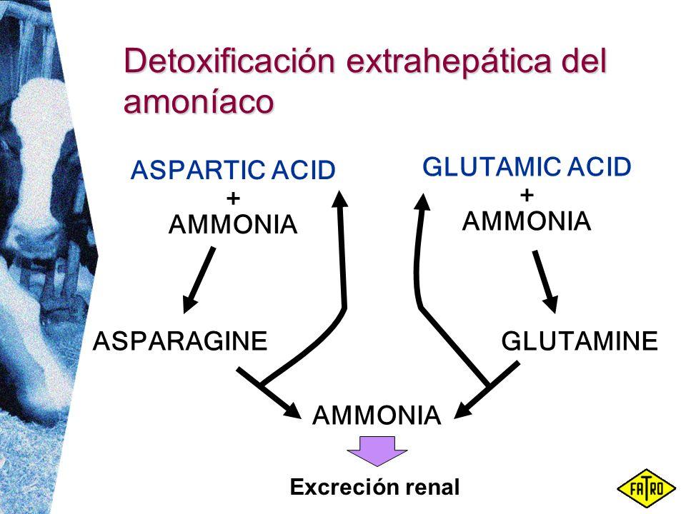Detoxificación extrahepática del amoníaco GLUTAMINE GLUTAMIC ACID + AMMONIA ASPARAGINE ASPARTIC ACID + AMMONIA Excreción renal