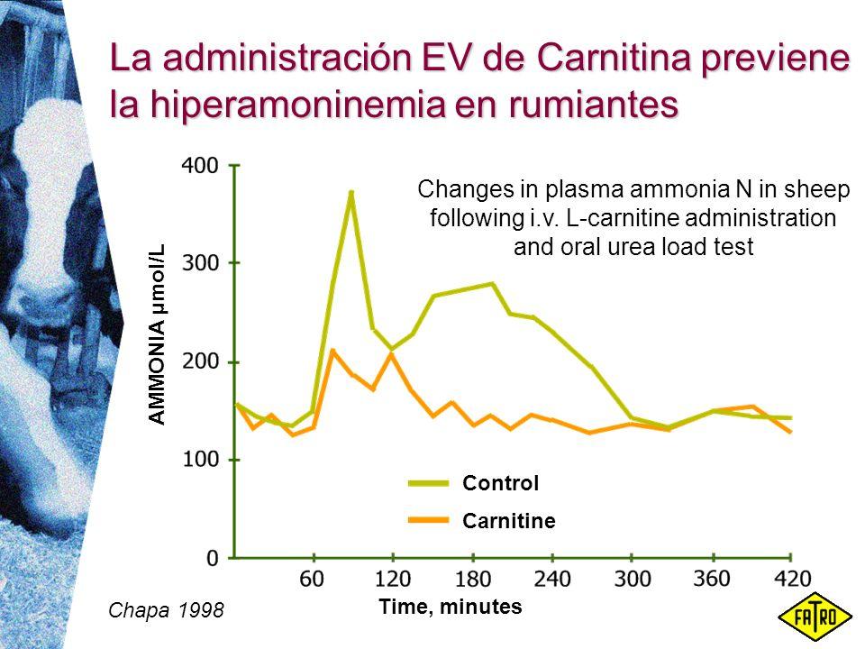 La administración EV de Carnitina previene la hiperamoninemia en rumiantes AMMONIA µmol/L Time, minutes Chapa 1998 Changes in plasma ammonia N in shee