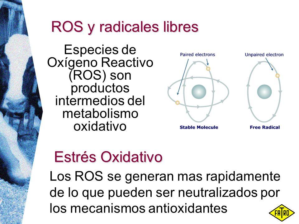 ROS y radicales libres Los ROS se generan mas rapidamente de lo que pueden ser neutralizados por los mecanismos antioxidantes Especies de Oxígeno Reac
