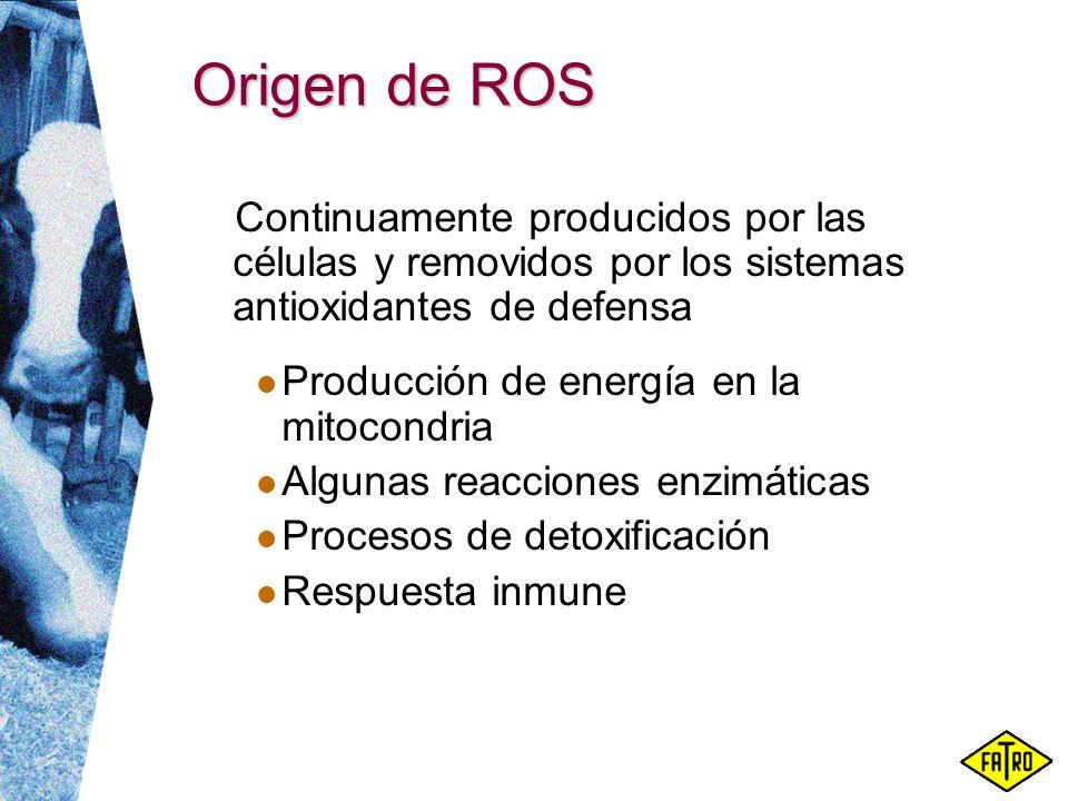 Origen de ROS Continuamente producidos por las células y removidos por los sistemas antioxidantes de defensa Producción de energía en la mitocondria A