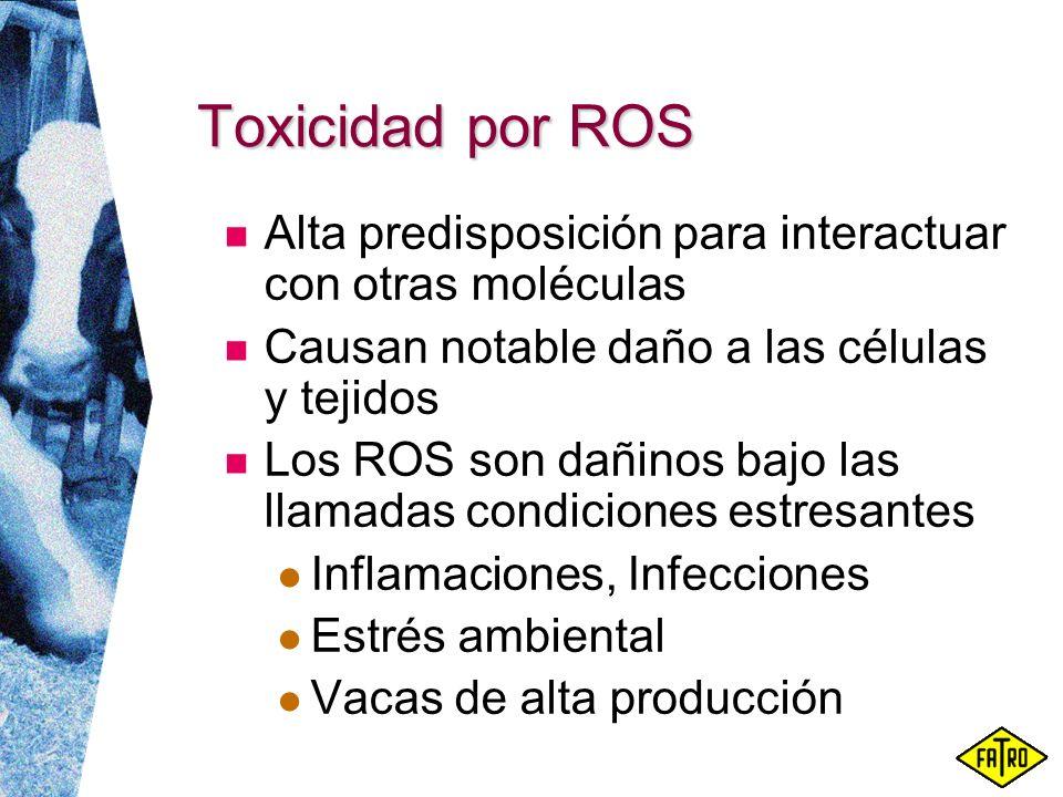 Toxicidad por ROS Alta predisposición para interactuar con otras moléculas Causan notable daño a las células y tejidos Los ROS son dañinos bajo las ll