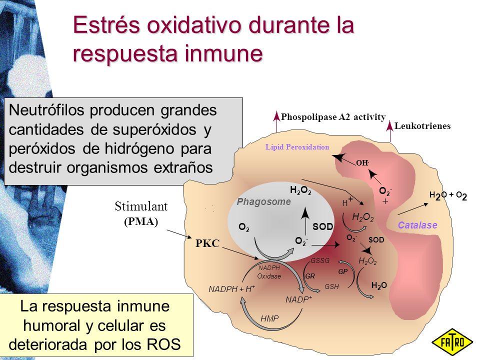 Estrés oxidativo durante la respuesta inmune Neutrófilos producen grandes cantidades de superóxidos y peróxidos de hidrógeno para destruir organismos
