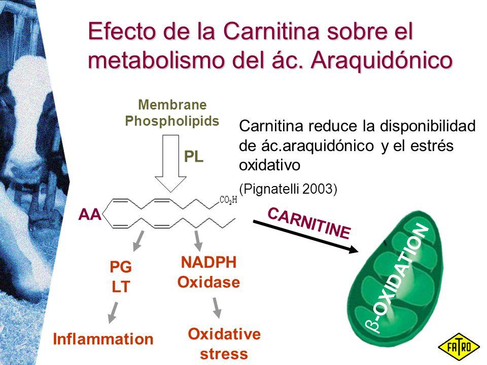 Efecto de la Carnitina sobre el metabolismo del ác. Araquidónico Carnitina reduce la disponibilidad de ác.araquidónico y el estrés oxidativo (Pignatel