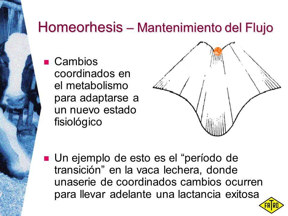 Homeorhesis – Mantenimiento del Flujo Un ejemplo de esto es el período de transición en la vaca lechera, donde unaserie de coordinados cambios ocurren