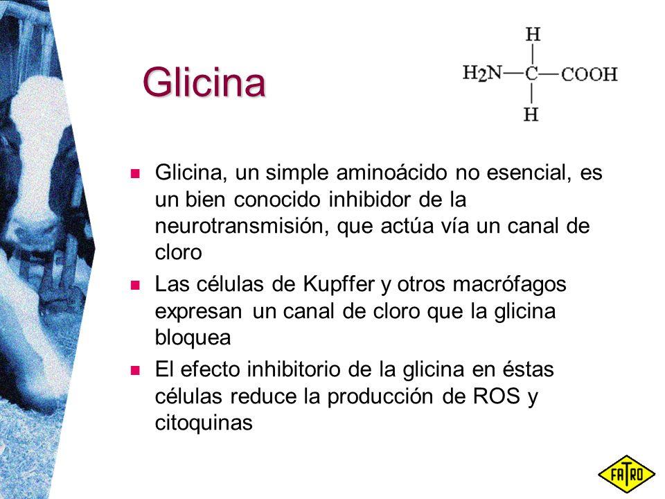 Glicina Glicina, un simple aminoácido no esencial, es un bien conocido inhibidor de la neurotransmisión, que actúa vía un canal de cloro Las células d