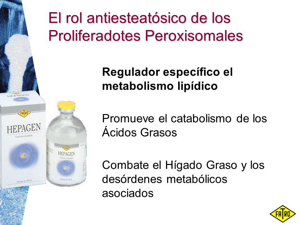 El rol antiesteatósico de los Proliferadotes Peroxisomales Regulador específico el metabolismo lipídico Promueve el catabolismo de los Ácidos Grasos C