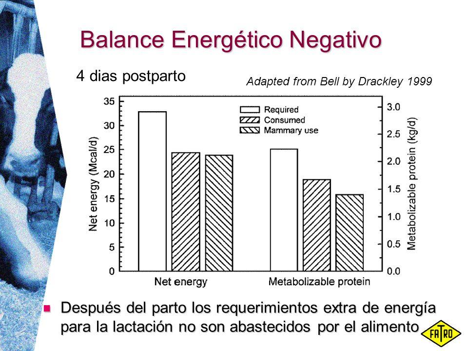 Balance Energético Negativo Después del parto los requerimientos extra de energía para la lactación no son abastecidos por el alimento Después del par