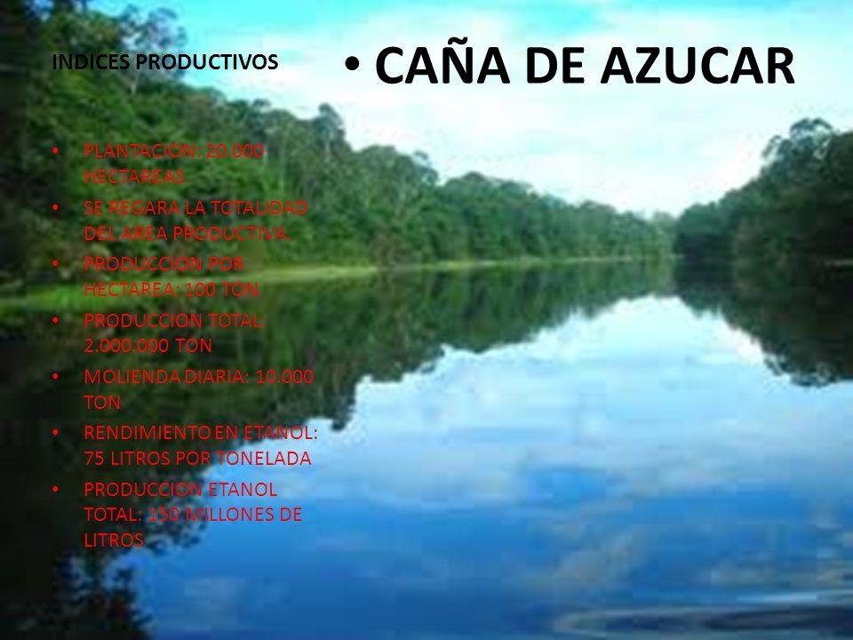 INDICES PRODUCTIVOS CAÑA DE AZUCAR PLANTACION: 20.000 HECTAREAS SE REGARA LA TOTALIDAD DEL AREA PRODUCTIVA. PRODUCCION POR HECTAREA: 100 TON PRODUCCIO