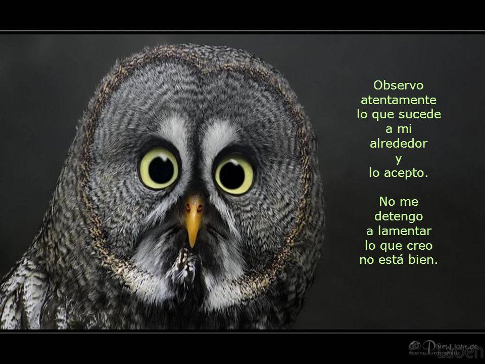 Observo atentamente lo que sucede a mi alrededor y lo acepto.