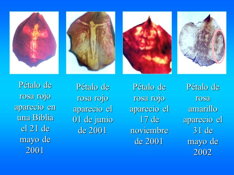Virgen Rosa Mística de la Iglesia San Pedro y San Pablo de la ciudad de Anaco derrama lagrimas de aceite en este lugar desde octubre de 2000 Virgen Rosa Mistica derrama lagrimas de aceite desde el 18 de marzo de 2003