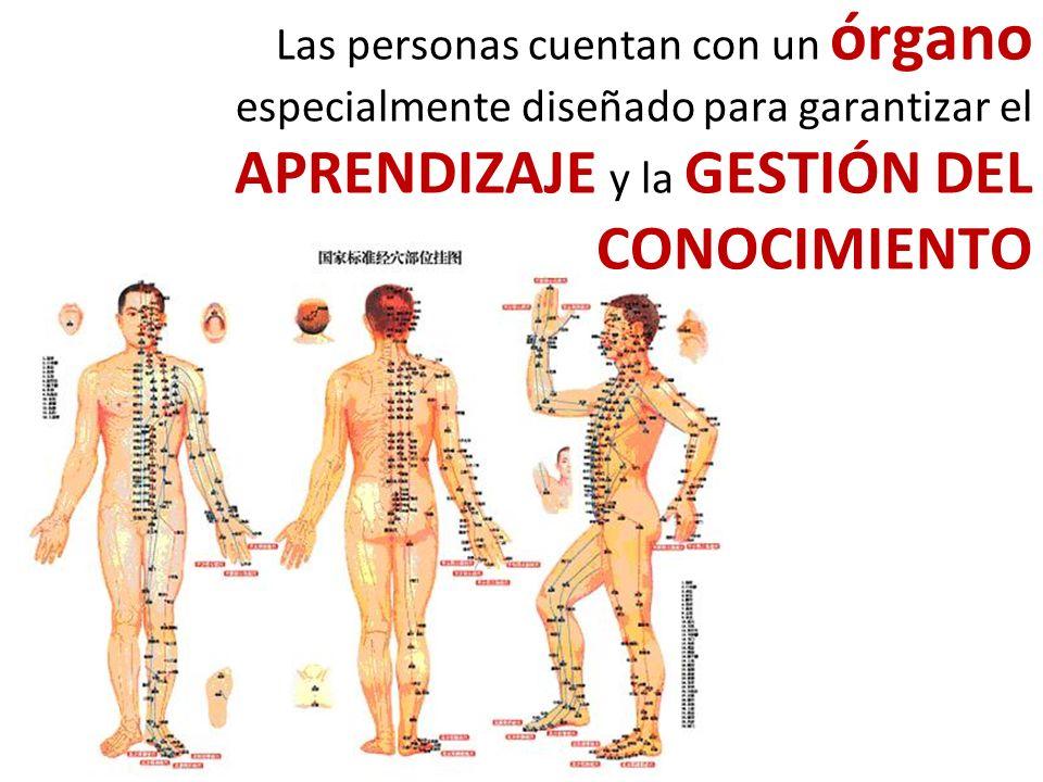 Las personas cuentan con un órgano especialmente diseñado para garantizar el APRENDIZAJE y la GESTIÓN DEL CONOCIMIENTO