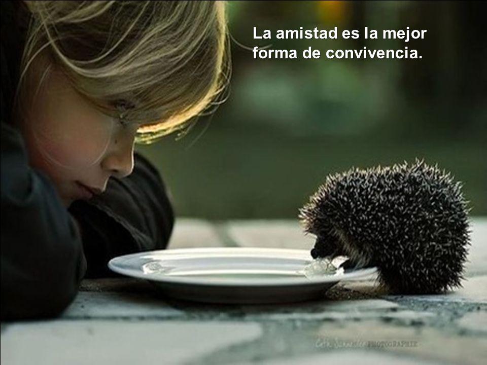La amistad es la mejor forma de convivencia.
