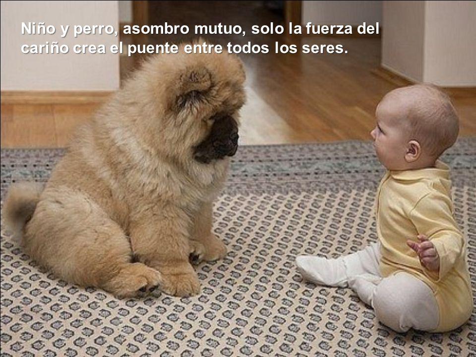 Niño y perro, asombro mutuo, solo la fuerza del cariño crea el puente entre todos los seres.