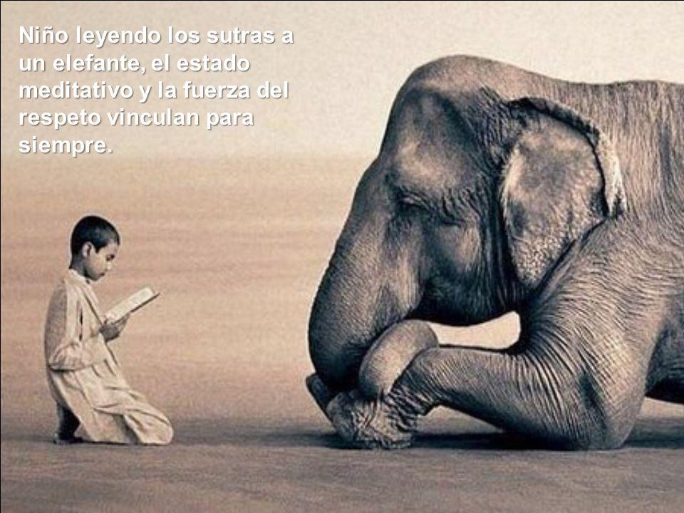 Niño leyendo los sutras a un elefante, el estado meditativo y la fuerza del respeto vinculan para siempre.
