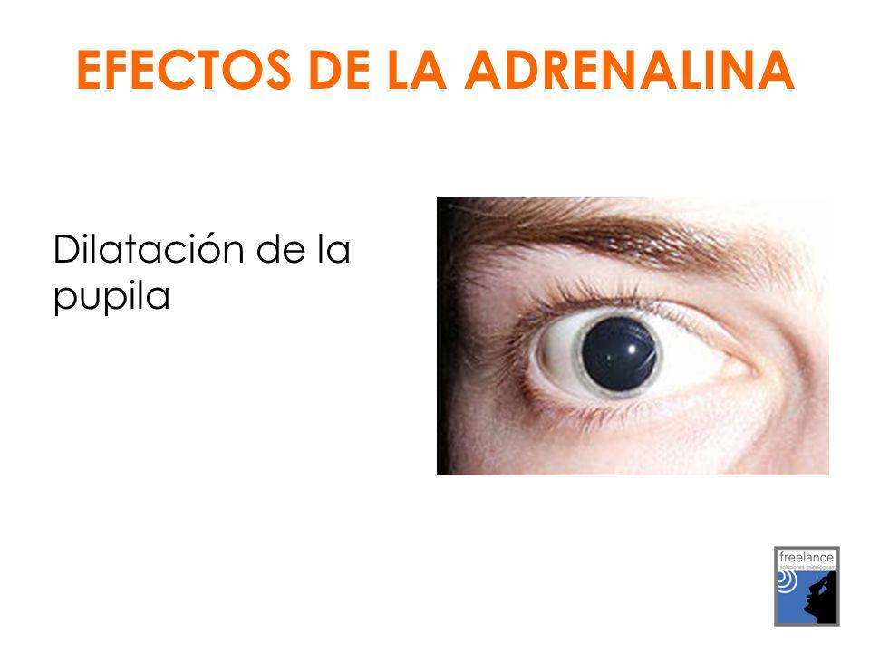 Dilatación de la pupila