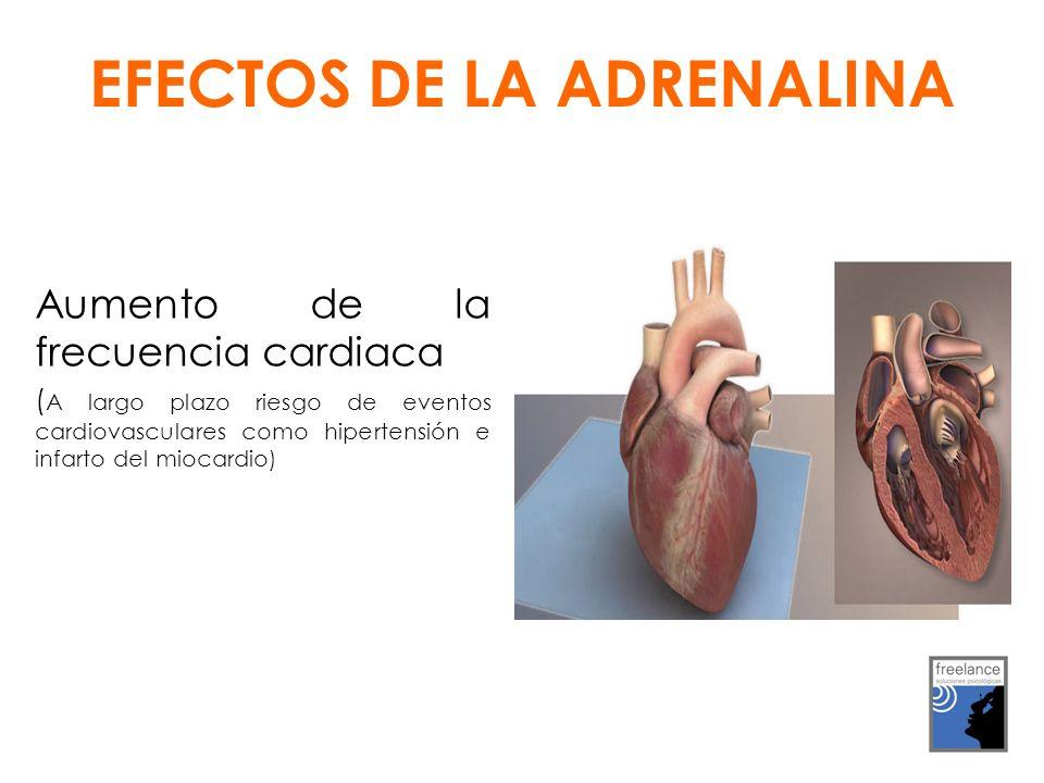 Aumento de la frecuencia cardiaca ( A largo plazo riesgo de eventos cardiovasculares como hipertensión e infarto del miocardio) EFECTOS DE LA ADRENALINA