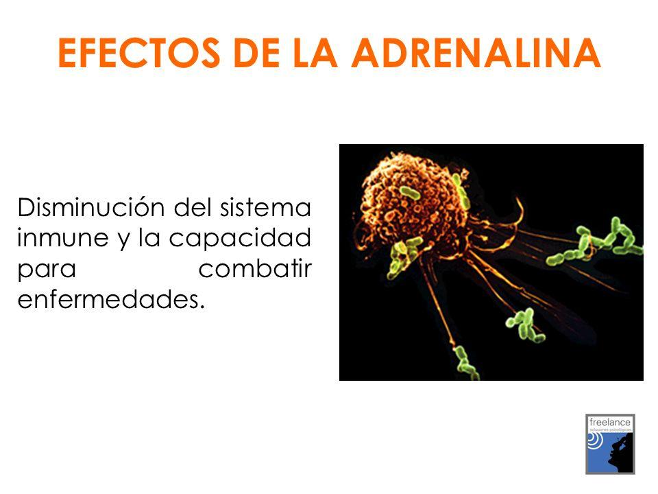Disminución del sistema inmune y la capacidad para combatir enfermedades. EFECTOS DE LA ADRENALINA