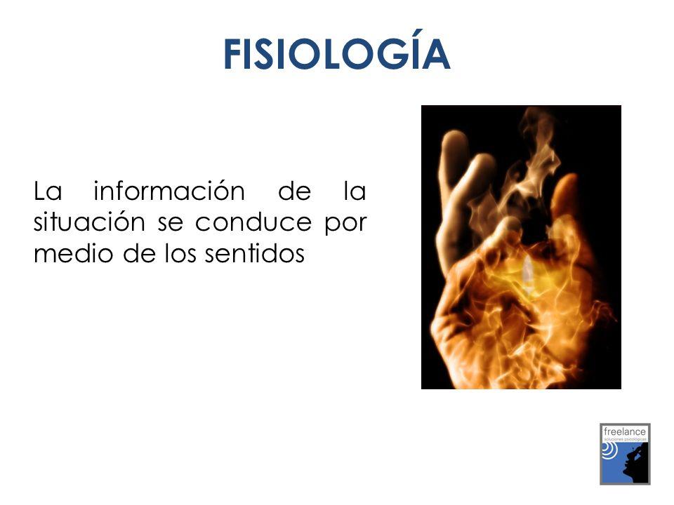 La información de la situación se conduce por medio de los sentidos FISIOLOGÍA