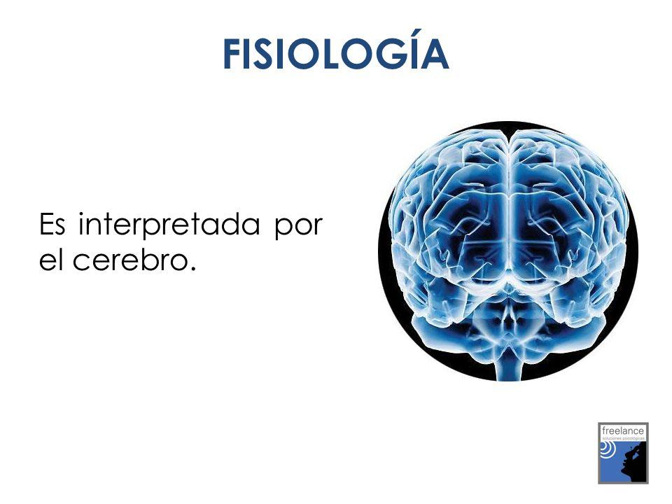 Es interpretada por el cerebro. FISIOLOGÍA
