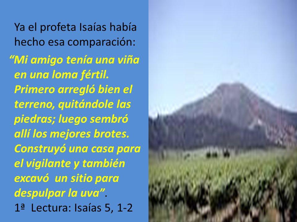 Ya el profeta Isaías había hecho esa comparación: Mi amigo tenía una viña en una loma fértil. Primero arregló bien el terreno, quitándole las piedras;