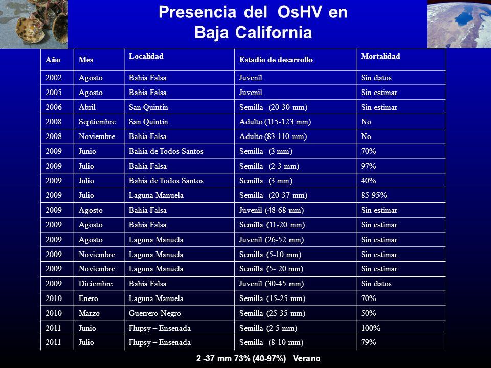 Presencia del OsHV en Baja California AñoMes Localidad Estadio de desarrollo Mortalidad 2002AgostoBahía FalsaJuvenilSin datos 2005AgostoBahía FalsaJuv