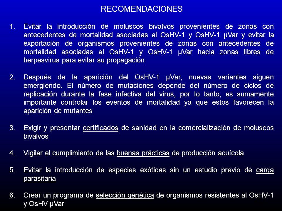 20 RECOMENDACIONES 1.Evitar la introducción de moluscos bivalvos provenientes de zonas con antecedentes de mortalidad asociadas al OsHV-1 y OsHV-1 µVa