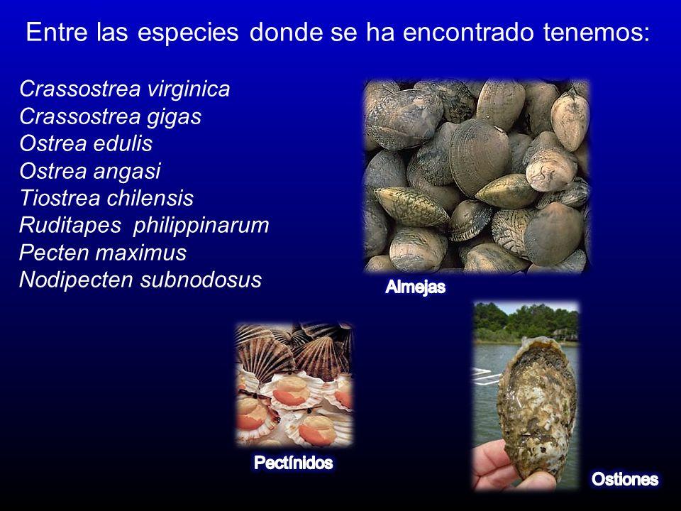Entre las especies donde se ha encontrado tenemos: Crassostrea virginica Crassostrea gigas Ostrea edulis Ostrea angasi Tiostrea chilensis Ruditapes ph
