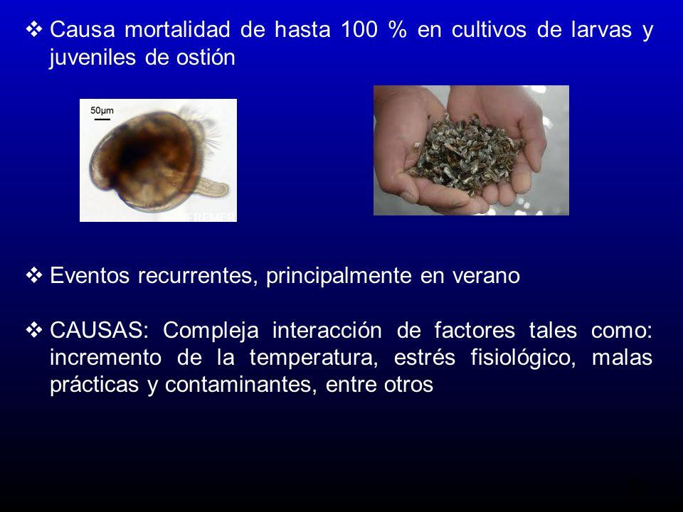 5 Causa mortalidad de hasta 100 % en cultivos de larvas y juveniles de ostión Eventos recurrentes, principalmente en verano CAUSAS: Compleja interacción de factores tales como: incremento de la temperatura, estrés fisiológico, malas prácticas y contaminantes, entre otros IFREMER