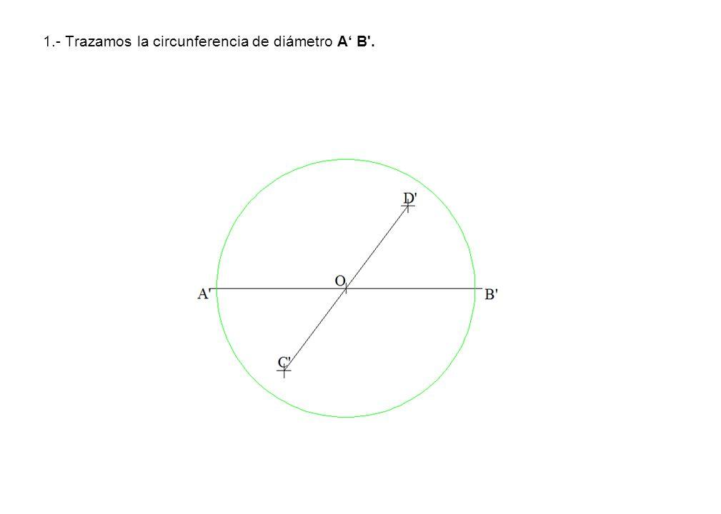 1.- Trazamos la circunferencia de diámetro A B'.