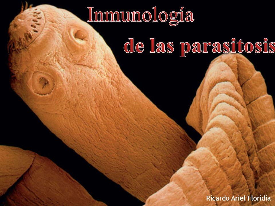 Hepatomegalia y esplenomegalia en respuesta al incremento de la acción de los macrófagos (Leishmania, tripanosomas, paludismo) Granulomas de células T (Esquistosomiasis) Elefantiasis (filarias) Inmunocomplejos (Paludismo) Liberación de mediadores de mastocitos por incremento en concentración de IgE.