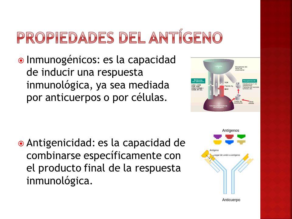 Inmunogénicos: es la capacidad de inducir una respuesta inmunológica, ya sea mediada por anticuerpos o por células. Antigenicidad: es la capacidad de