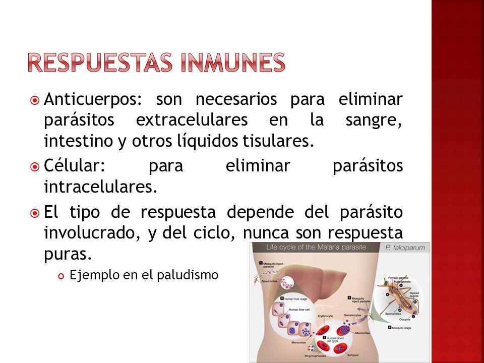 Anticuerpos: son necesarios para eliminar parásitos extracelulares en la sangre, intestino y otros líquidos tisulares. Célular: para eliminar parásito