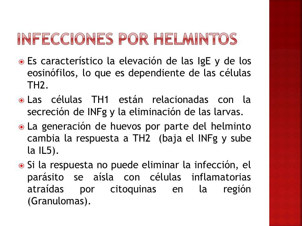 Es característico la elevación de las IgE y de los eosinófilos, lo que es dependiente de las células TH2. Las células TH1 están relacionadas con la se