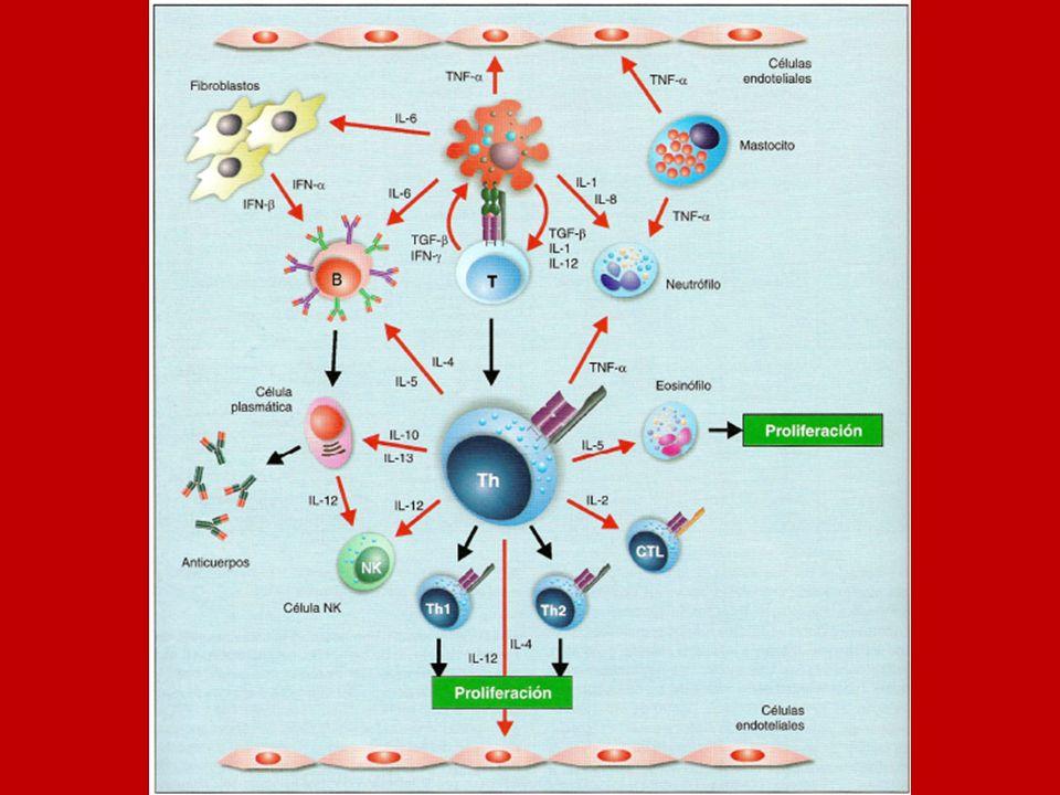 IL12 producida por macrófagos y células B promueve el crecimiento de las células TH1 activadas y de NK que también produce IFNg (citoquinas anti- leishmania).