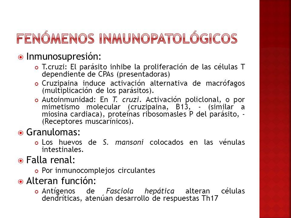 Inmunosupresión: T.cruzi: El parásito inhibe la proliferación de las células T dependiente de CPAs (presentadoras) Cruzipaina induce activación altern