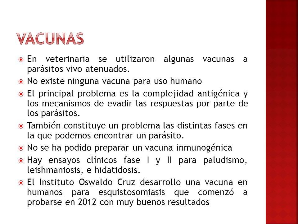 En veterinaria se utilizaron algunas vacunas a parásitos vivo atenuados. No existe ninguna vacuna para uso humano El principal problema es la compleji