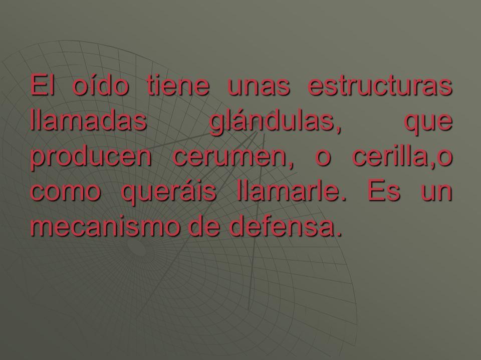 El oído tiene unas estructuras llamadas glándulas, que producen cerumen, o cerilla,o como queráis llamarle. Es un mecanismo de defensa.