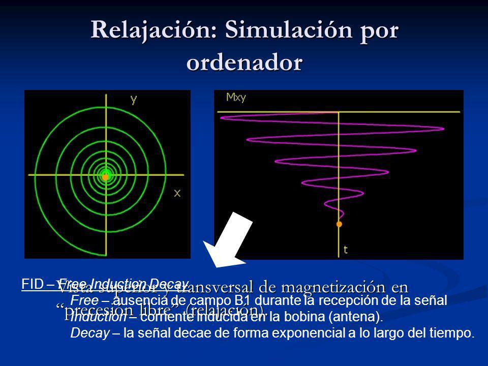 Vista superior y transversal de magnetización en precesión libre (relajación).