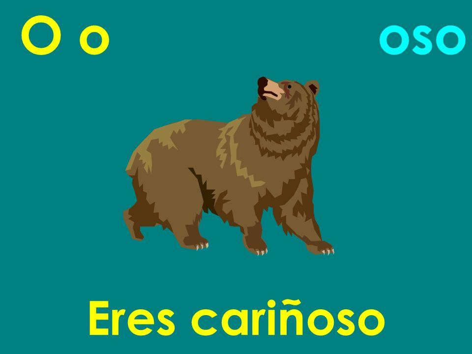 O o Eres cariñoso oso