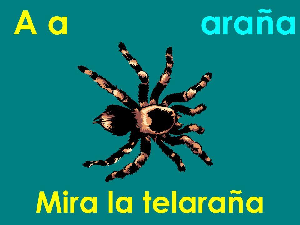 A a Mira la telaraña araña