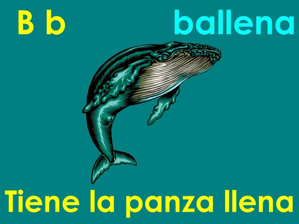 B b Tiene la panza llena ballena