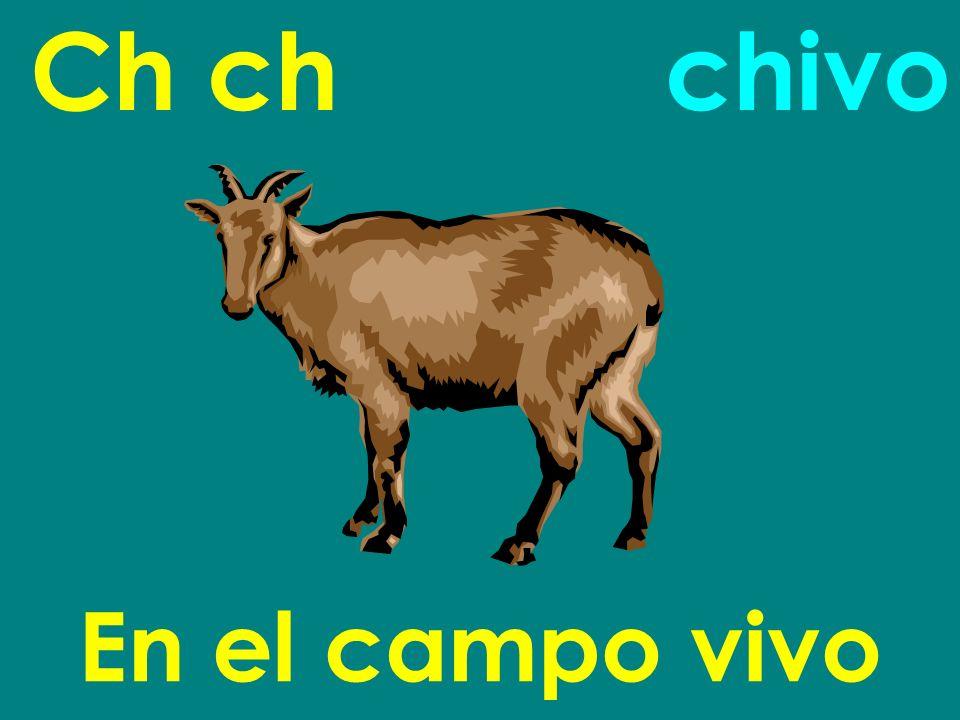 Ch ch En el campo vivo chivo