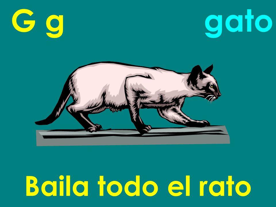 G g Baila todo el rato gato